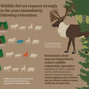New paper: Responses to Caribou habitat restoration